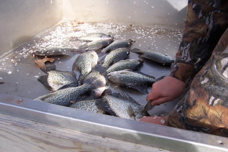 Fall Crappie